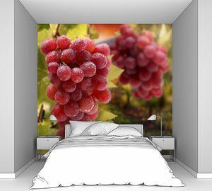Спелый виноград на винограднике