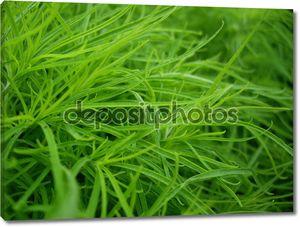Зеленая трава макрос