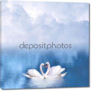 Изящные лебеди в любви