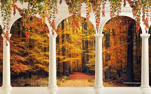 Вид из арок на осенний парк