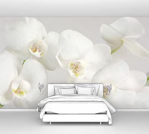 Макро белых орхидей на светлом фоне