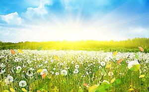Поляна залитая утренним солнцем