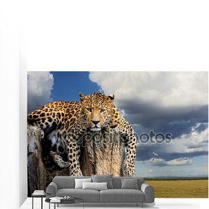 Лежащий леопард