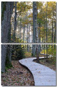 Деревянная тропа в дубовом лесу