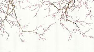 Ветки сакуры