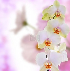 Beautiful flowers on abstract  light pink background