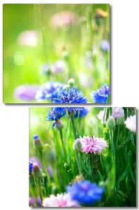 Цветут дикие голубые цветы