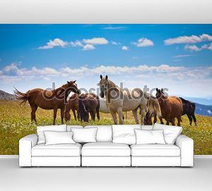Лошадь поведение на вершину