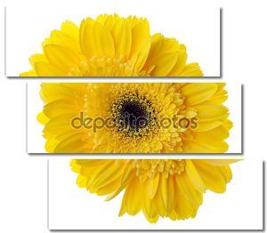 Цветок Желтые герберы