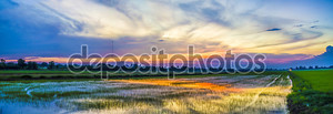Красивый закат небо и рисовые поля
