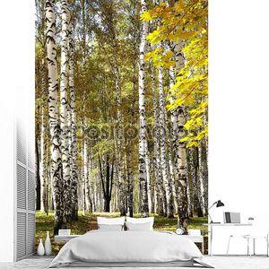 Золотой смешанный Осенний лес в солнечную погоду