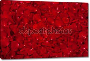 фон лепестков красной розы
