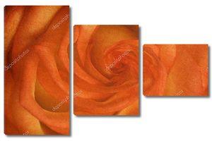 Рыжая роза крупно