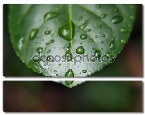 Влажный лист макрос 4