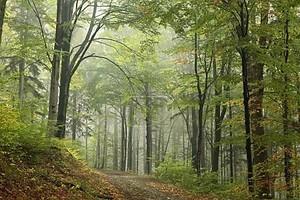 Ранней осенью лиственный лес