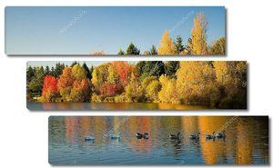 Стая диких гусей в лесу осенью
