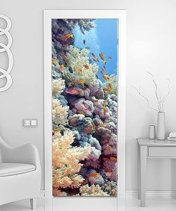 Золотые рыбки в кораллах