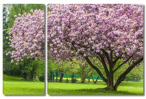 Красивая сакуры дерево в парке
