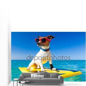 серфер собака