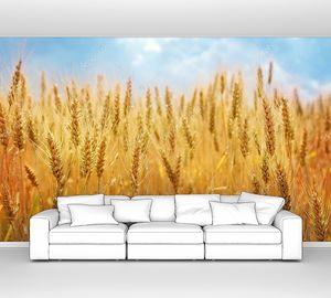 Пшеничное поле с полоской голубого неба