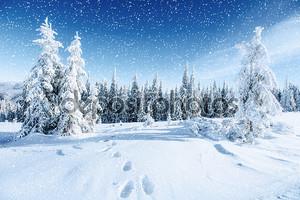 Фантастический зимний пейзаж и проторенный тропы, которые ведут в