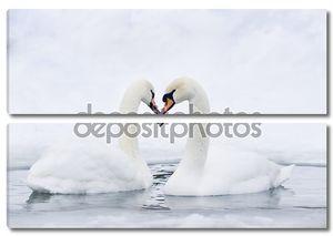 Пара лебедей, формируя сердце