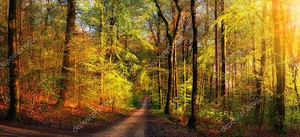 Золотые лесные пейзажи с лучами теплого света, освещающими листву, и тропинка, ведущая к сцене