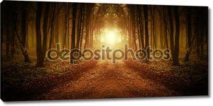 Дорога в лесу симметрично с туман на рассвете