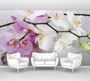 Розовые и белые орхидеи с каплями росы