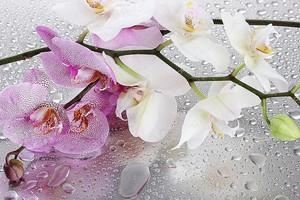 Розовые и белые красивые орхидеи со снижениями
