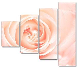 Нежная розовая роза бутон