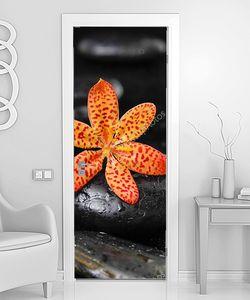Орхидея с мокрыми камнями