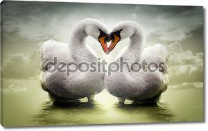 пара лебедей в любви