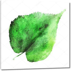Зеленый лист акварелью на белом фоне