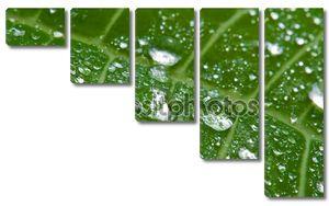 Макрос Влажный лист