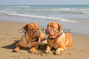Две расслабленной собаки, лежа на пляже