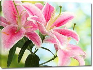 Розовая лилия на зеленом фоне