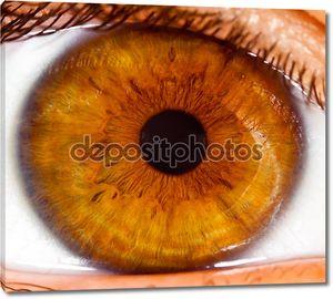человеческий глаз крупным планом ...