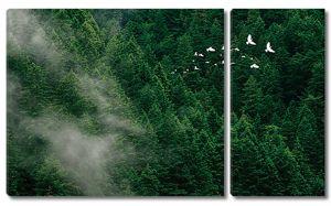 Туман по еловому лесу