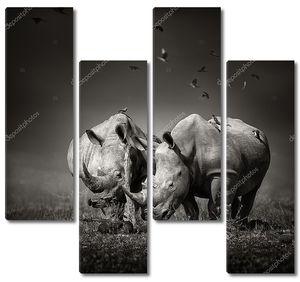 Два носорога с птицами в Бо