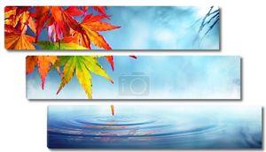 Zen осенью - красный клен листья на пруду