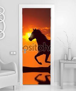 лошадь работает во время заката, с отражением в воде