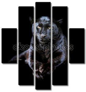 Черный леопард портрет