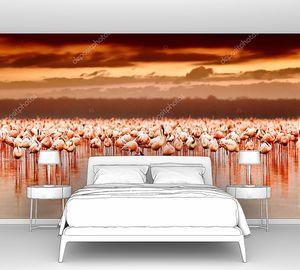 Африканские фламинго на озере