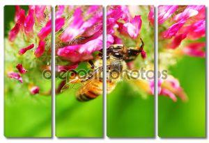 крупный план пчелы