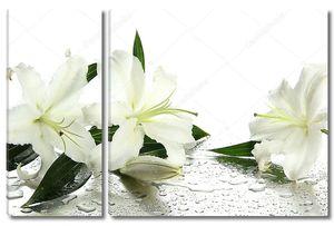 Красивые лилии на белом