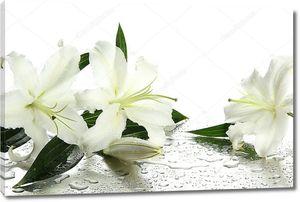 Красивая лилия, изолированные на белом