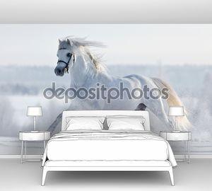 Белая лошадь в зимний период