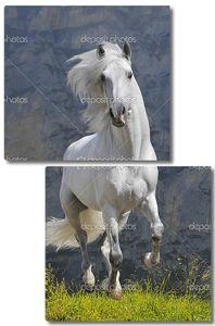 Белая лошадь бежит Галоп