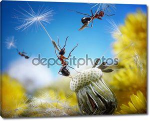 муравьев, летающих с хитрым зонтики - Семена одуванчика, муравей сказки